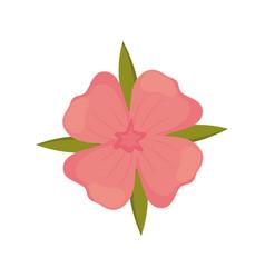 Geranium flower decoration image vector