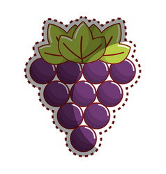 Sticker grapes fruit icon image vector