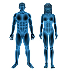 Male female human body vector