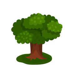 summer sprawling tree vector image