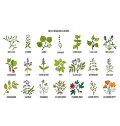 Best sedatives herbs vector