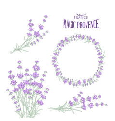 set of lavender flowers elements vector image