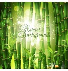 Oriental bamboo grove vector