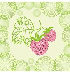 Raspberry background vector image vector image