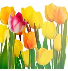 Yellow tulips card eps 10 vector