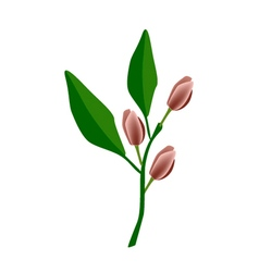 Port wine magnolia flower or magnolia figo flower vector