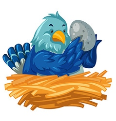 Blue bird hatching egg in nest vector image vector image
