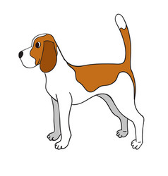 cute cartoon beagle isolated on white background vector image vector image