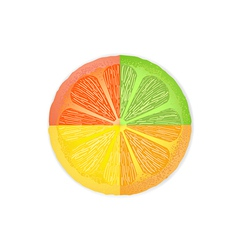 mixed citrus fruit slices vector image