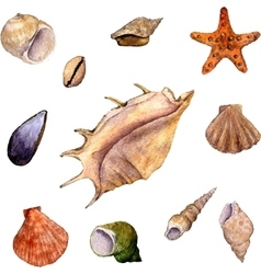 Set of watercolor drawing shells vector
