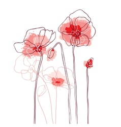 Red poppies on a white background vector image