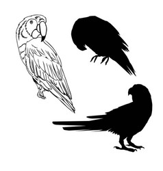 With parrot silhouettes collection isolated on vector