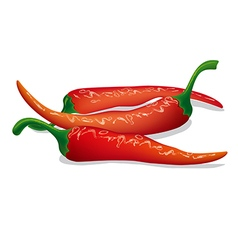 Pepper chilli vector