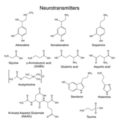Basic neurotransmitters vector image