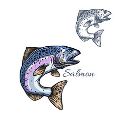 salmon fish isolated sketch icon vector image vector image