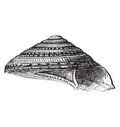 Solarium perpectivum vintage vector