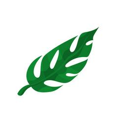 green split tropical leaf vector image vector image