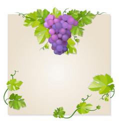 Black grapes vector