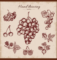 Berries hand drawn design vector