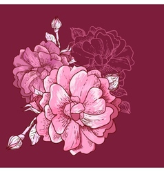 Beautiful Rose Background vector image
