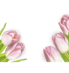Beautiful bouquet of pink tulips eps 10 vector