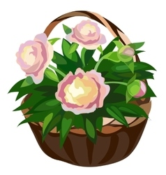 Bouquet of pink flowers in straw basket vector