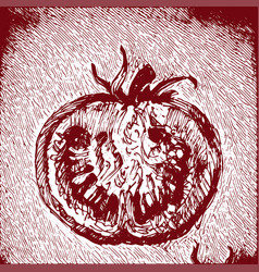 Digital detailed tomatoes hand drawn vector