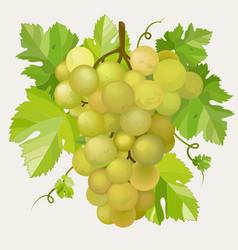 green grapes vector image