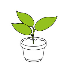 plant in pot design vector image vector image