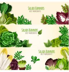 Salads or leafy vegetables banners set vector
