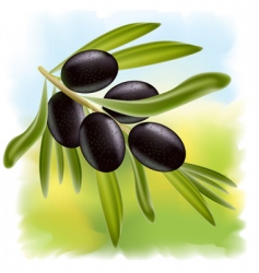 a branch of black olives vector image vector image