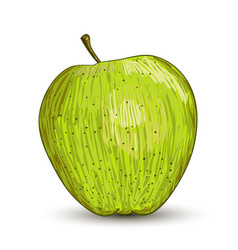 digital painting of apple vector image