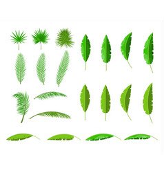 tropical green leaves jungle leaves set vector image