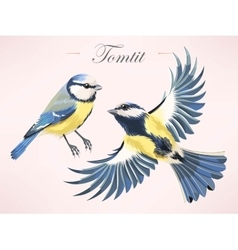 tomtit vector image