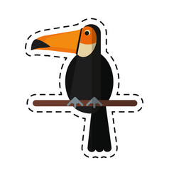 Cartoon toucan bird exotic fauna vector