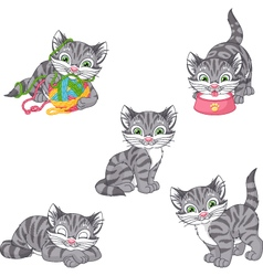 Gray Kitten vector image