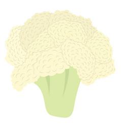 Cauliflower icon vector