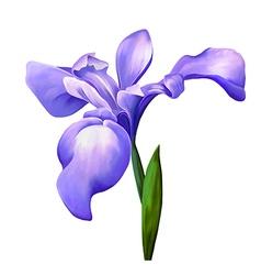 Violet iris flower vector