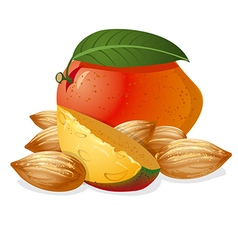 Mango and almonds vector
