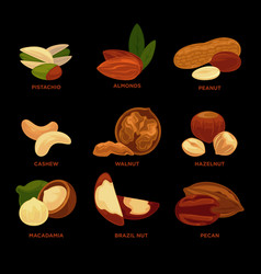 nuts collection with names isolated on black vector image vector image