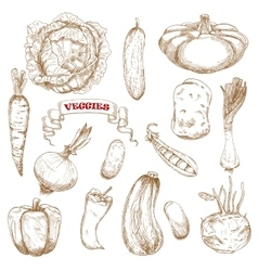 Healthy organic isolated vegetables sketches vector