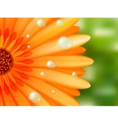 Gerber petals with water drops plus EPS10 vector image