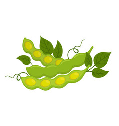 natural organic soybeans made in flat style vector image