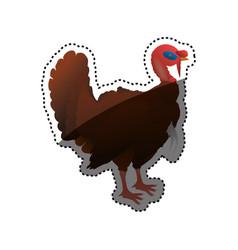 turkey bird farm vector image