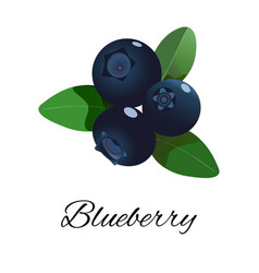 Blueberries isolated icon vector