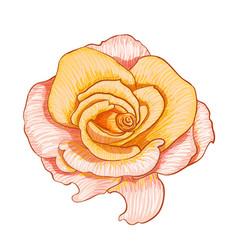 Digital painting of flower vector