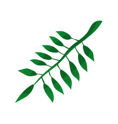 green leaf of tropical tree vector image vector image