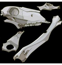 Skull fragments and animal bones vector