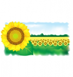 sunflower and field vector illustration vector image vector image