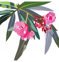 Tropic flowers branch vector